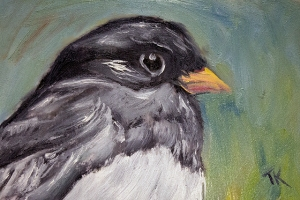 Dark Eyed Junco, 2014. (Oil, 4 x 6)